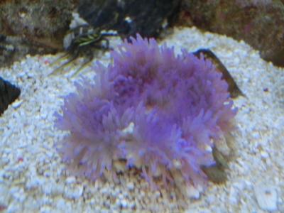 海水魚 191