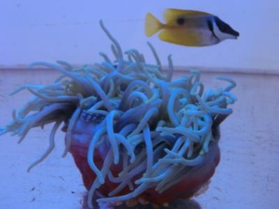 海水魚 192