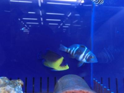 海水魚 199