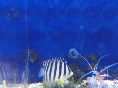 海水魚 204