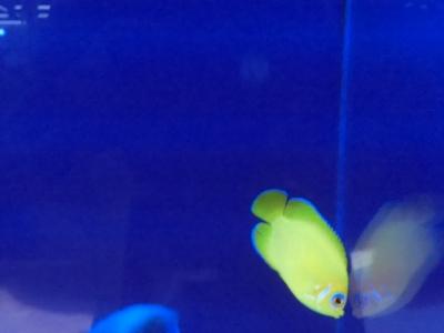 海水魚 200