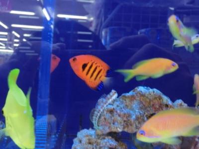 海水魚 201