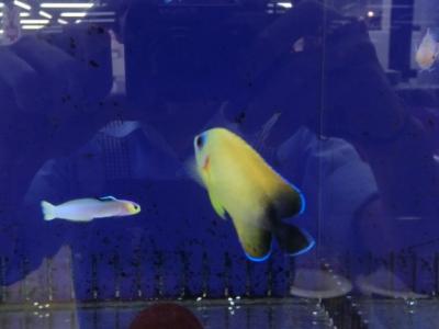 海水魚 202