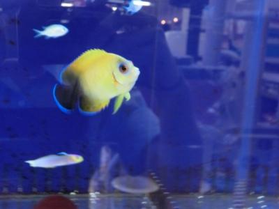 海水魚 203