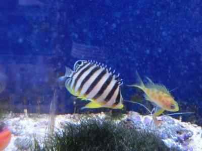 海水魚 205