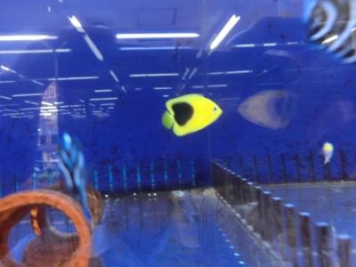 海水魚 210