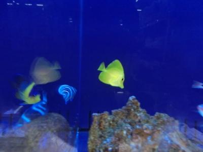 海水魚 208