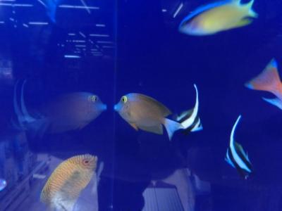 海水魚 209