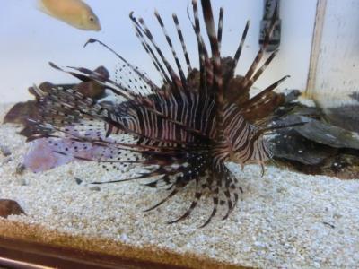 海水魚 211