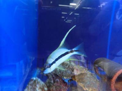 海水魚 214