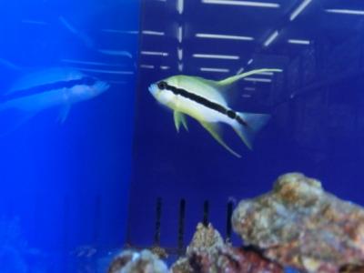 海水魚 215