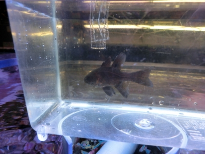 海水魚 219