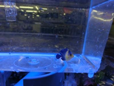 海水魚 220