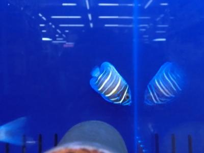 海水魚 223