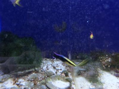 海水魚 231
