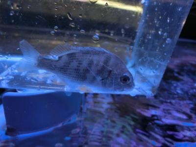 海水魚 233