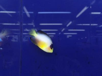 海水魚 242