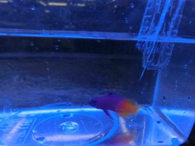 海水魚 241