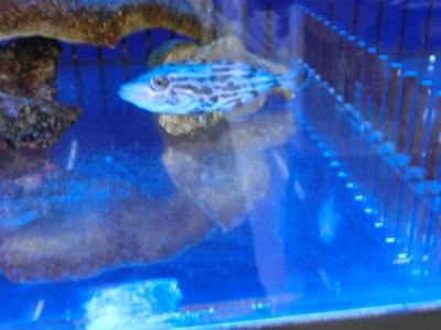 海水魚 253