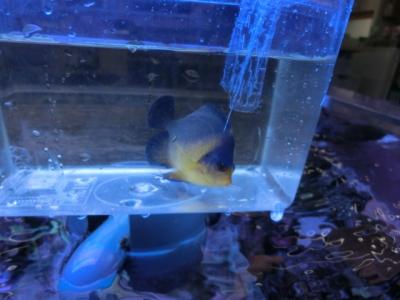 海水魚 249