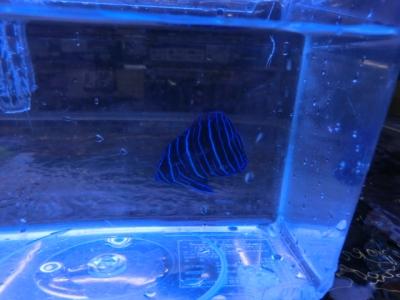 海水魚 251