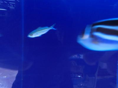 海水魚 252