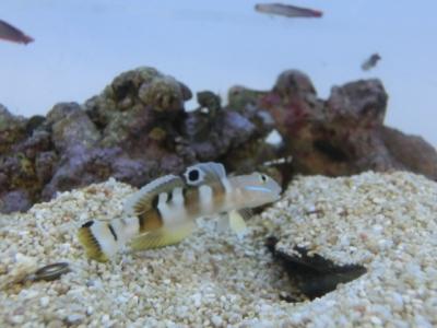 海水魚 254