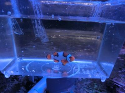 海水魚 274