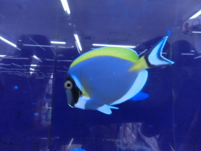 海水魚 272