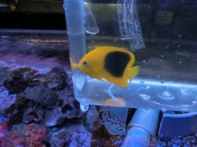 海水魚 273