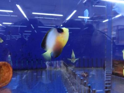 海水魚 278