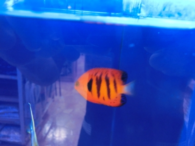 海水魚 275