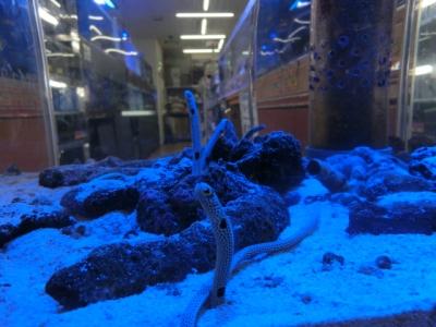 海水魚 277