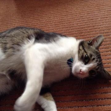 cat_1771_1.jpg