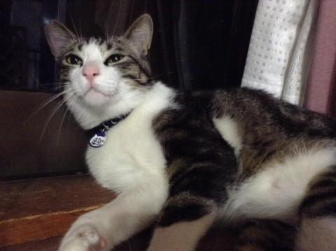 cat_1771_3.jpg
