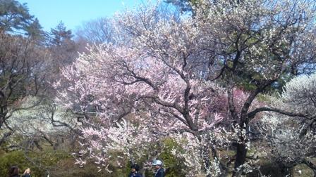 2014-03-12_12-25-35_769.jpg