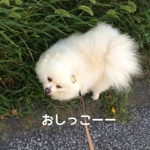 fc2blog_20140726180901d31.jpg