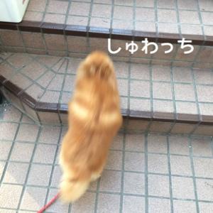 fc2blog_2014072618104356a.jpg