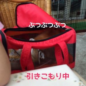 fc2blog_20140728204748e4c.jpg