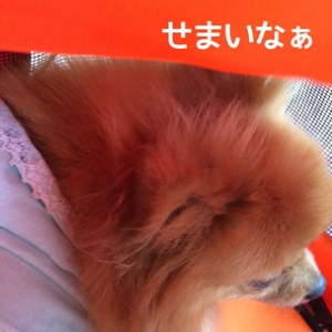 fc2blog_20140812191839533.jpg
