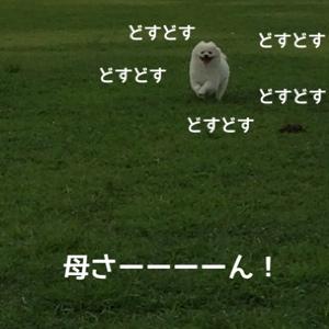 fc2blog_20140817100202b6e.jpg