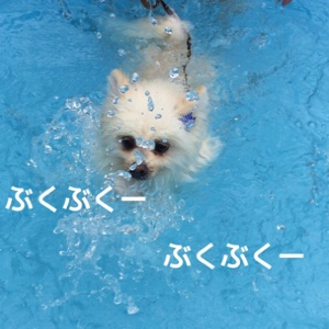 fc2blog_2014082220155042f.jpg