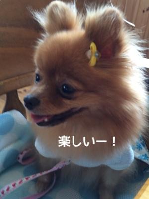 fc2blog_201408262001200e9.jpg