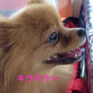 fc2blog_20140914134710f6a.jpg
