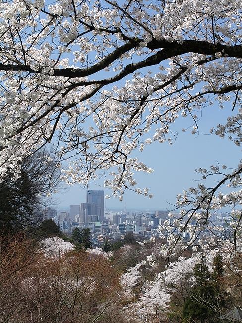 卯辰山の桜景色 桜の額に彩られた金沢市街