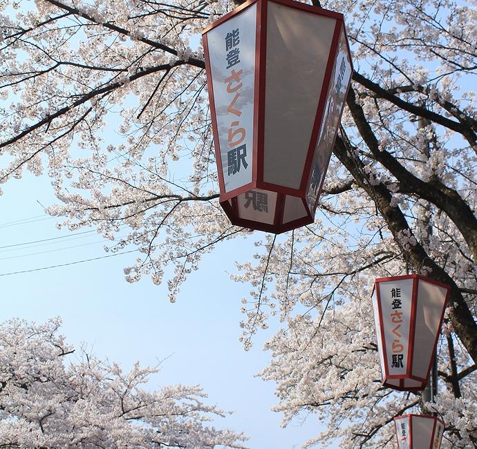 桜満開の能登さくら駅