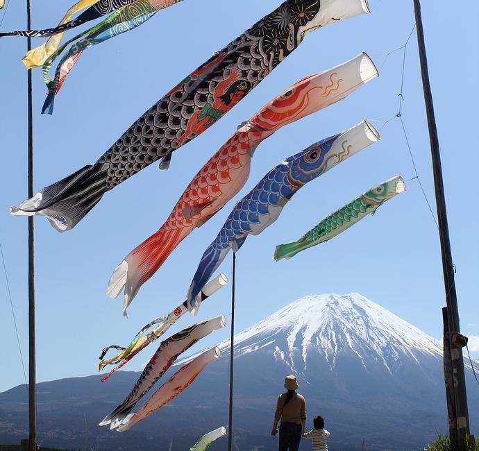 富士山と鯉のぼりの丘 朝霧高原にて