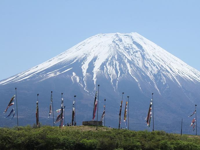 富士山と鯉のぼり 風が止むと・・・
