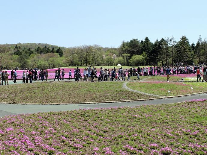富士芝桜まつり会場 大混雑