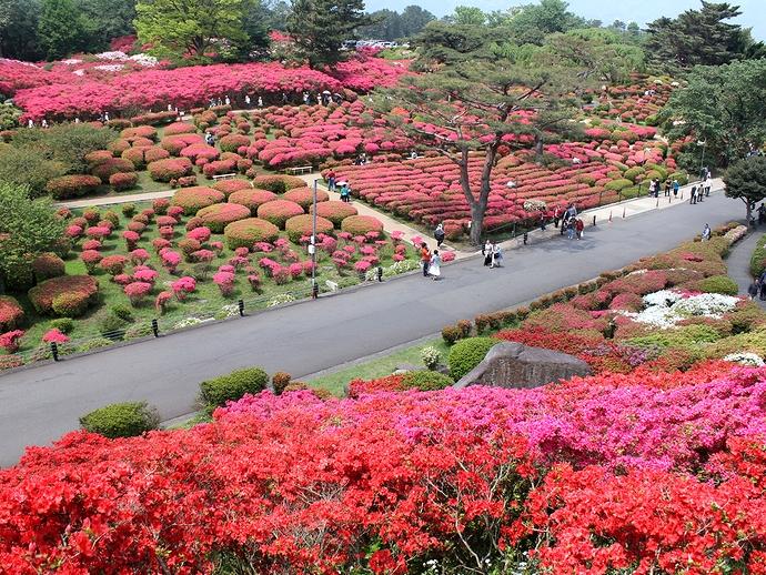 伊豆半島小室山公園のつつじ園
